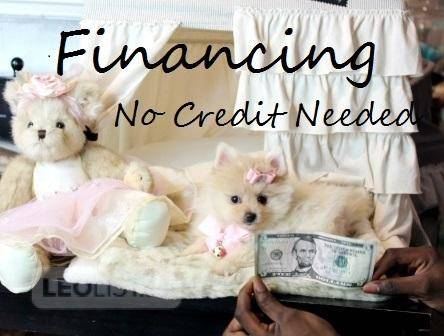 WE FINANCE=     BAD     CREDIT    OKAY.     T-CUP      Puppies      The   SMALLEST  PUPPIES   EVER